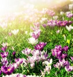 Wiosenne Zacisze